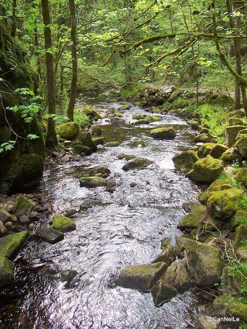 Vosges - le Saut du Bouchot - le ruisseau poursuit son cours au-delà du pont
